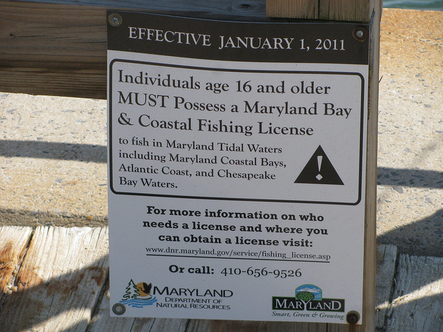 Fishing license for fishing rt 50 bridge ocean city md for Maryland fishing license